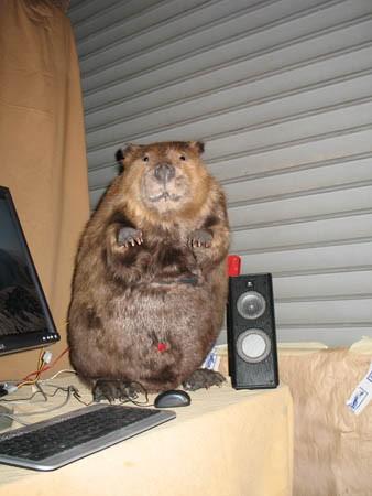 Beaver computer